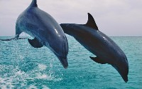 dolphin-picture.jpg